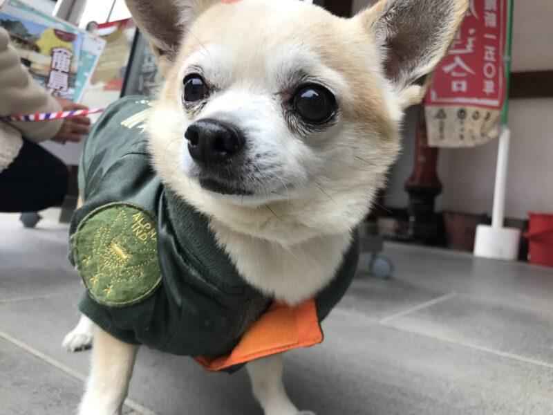 犬のシニアは何歳から?独学で在宅でできる愛玩動物介護士は老犬の飼い主にオススメの資格5