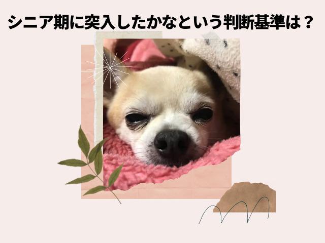 犬のシニアは何歳から?独学で在宅でできる愛玩動物介護士は老犬の飼い主にオススメの資格4